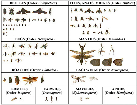 Old Bug Collection